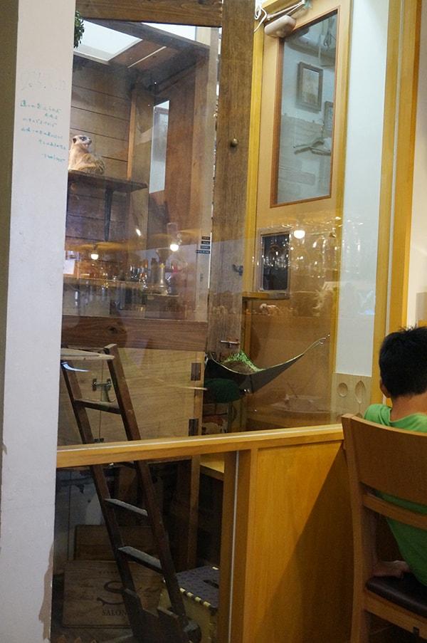 ミーアキャットに会えるカフェ、ルナカフェ